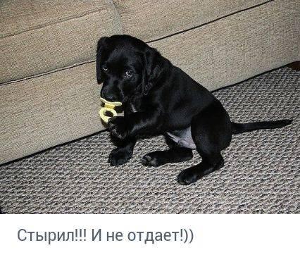 http://forumimage.ru/uploads/20170831/150416829676244712.jpg