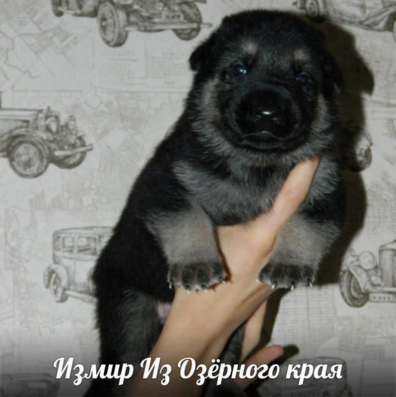 http://forumimage.ru/uploads/20170909/15049703332020510.jpg