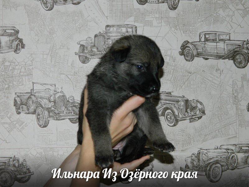 http://forumimage.ru/uploads/20170909/150497042171927552.jpg