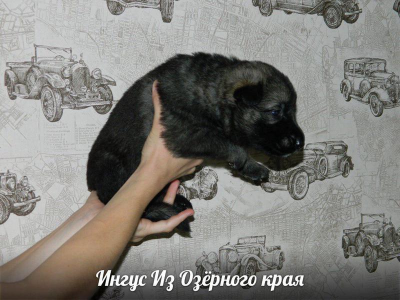 http://forumimage.ru/uploads/20170909/15049704795292823.jpg