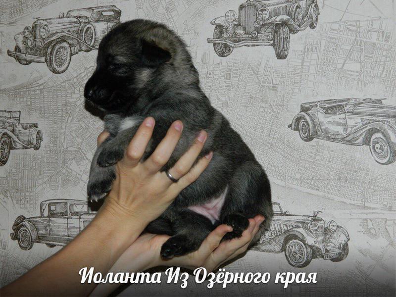 http://forumimage.ru/uploads/20170909/150497050759058275.jpg