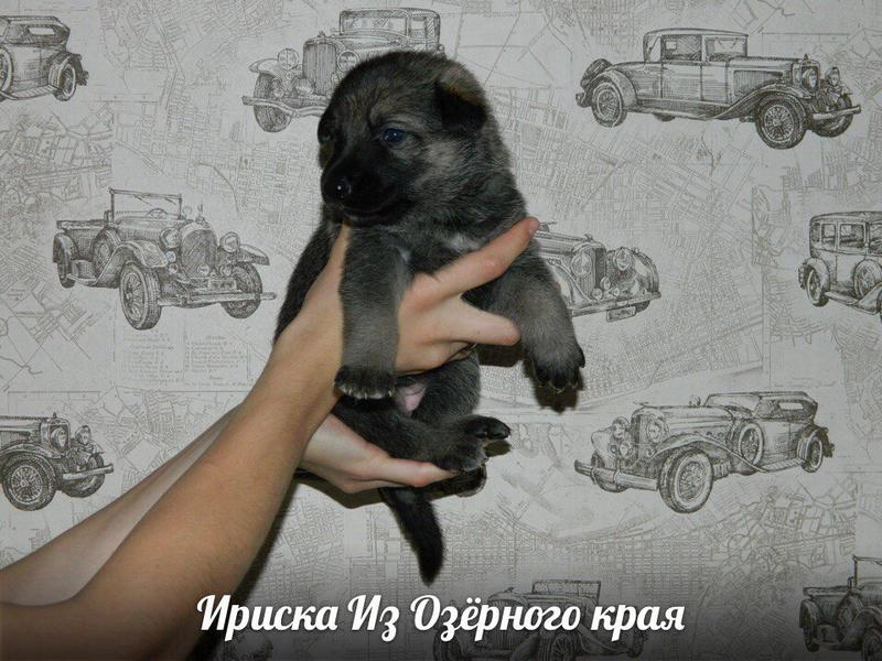 http://forumimage.ru/uploads/20170909/150497052764533617.jpg