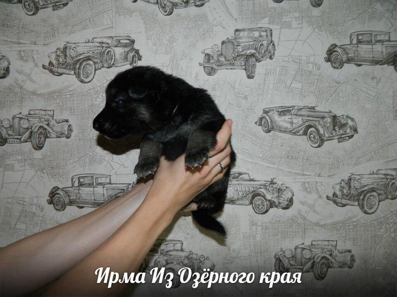 http://forumimage.ru/uploads/20170909/150497055232459384.jpg