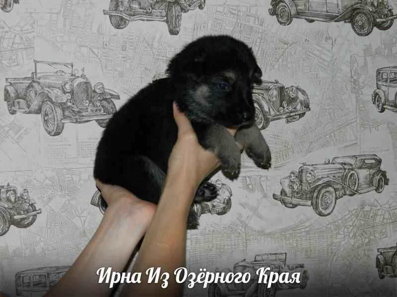 http://forumimage.ru/uploads/20170909/150497057393202978.jpg