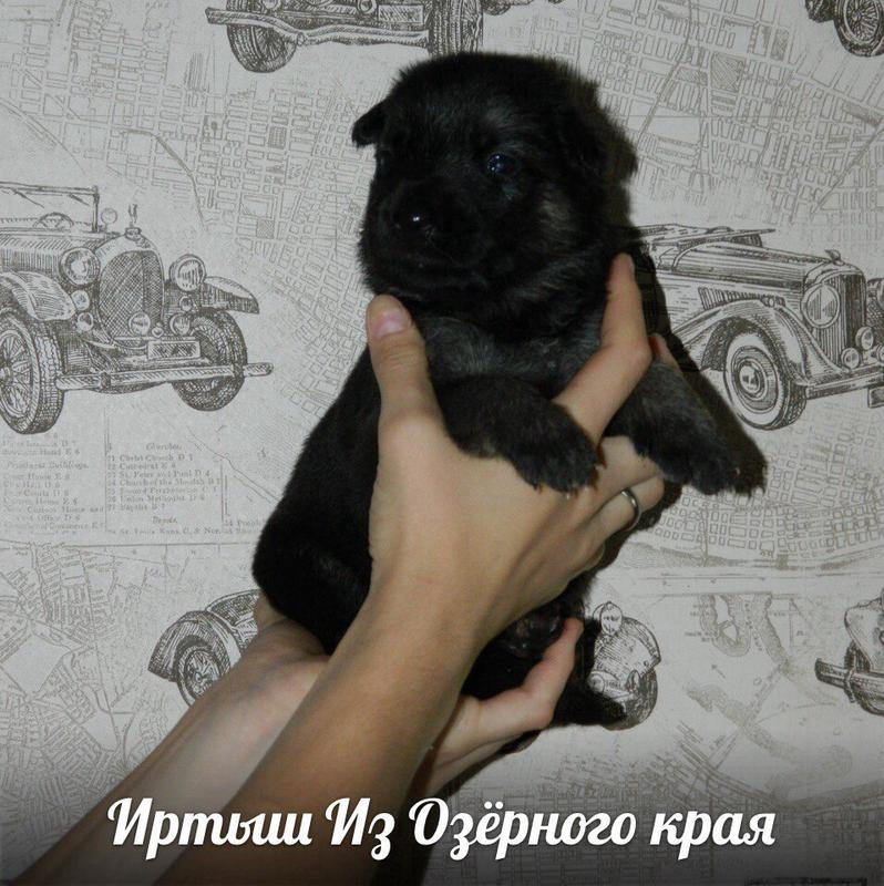http://forumimage.ru/uploads/20170909/150497060304324688.jpg