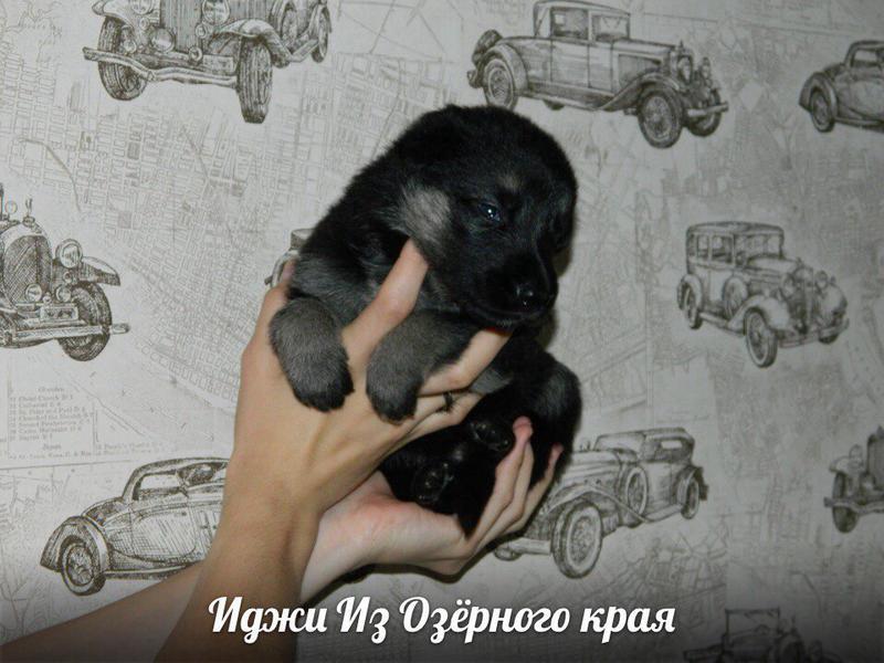 http://forumimage.ru/uploads/20170909/150497072435085262.jpg