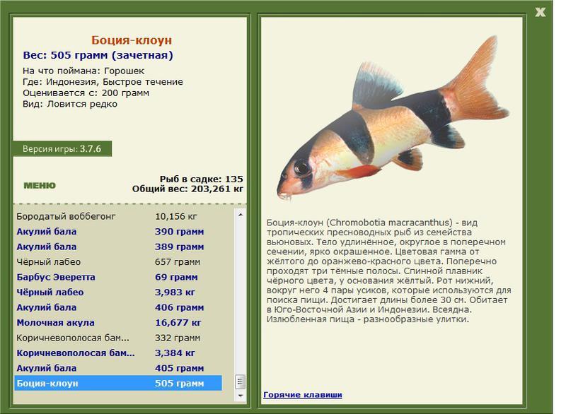 клоун • Рыбы • РУССКАЯ РЫБАЛКА