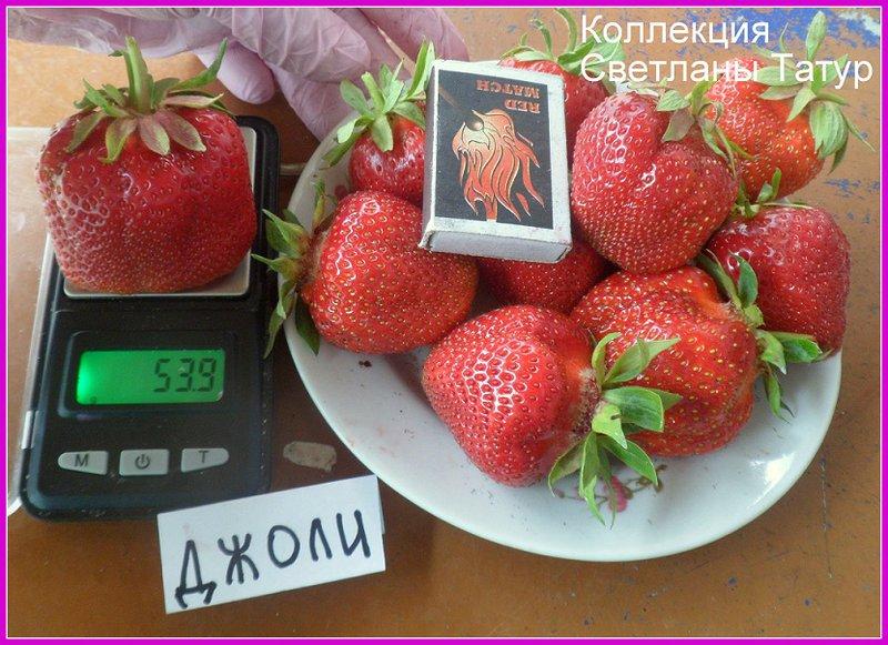 Обсуждение растений из СЗ фриго, кокинская