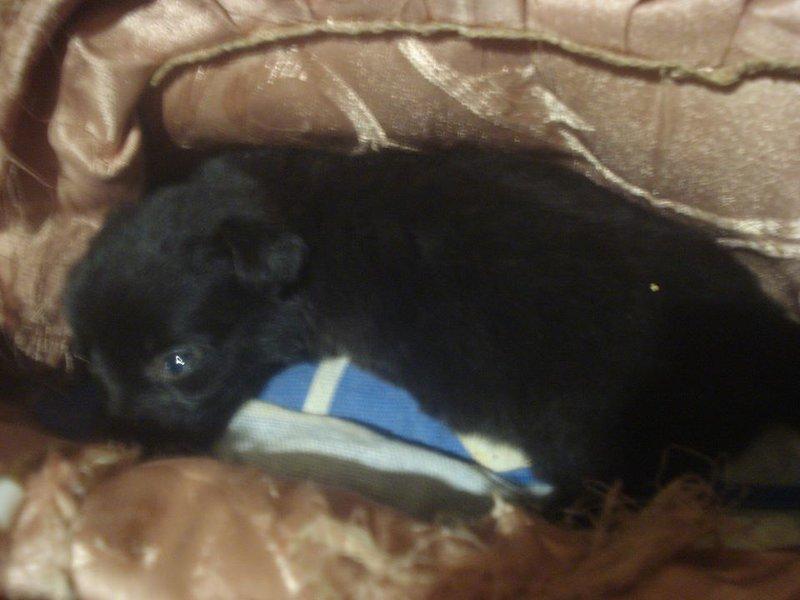 крохотного щенка с увечьями • Фин. отчеты