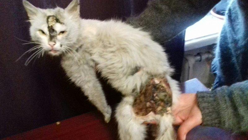Марсик. Пострадавший от бродячих собак(тяжелые травмы) • Финансовые отчеты животных ВОЛОНТЕРОВ