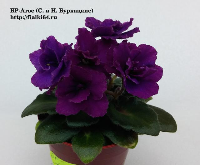 саратов гей форум цветоводов