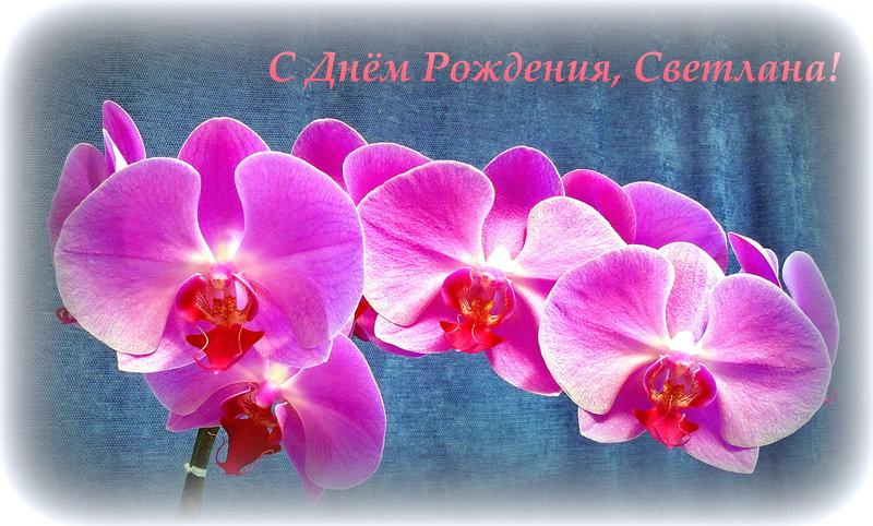 Светлана! С Днем Рождения!!!!!!!!!!!!!!!!!!!!