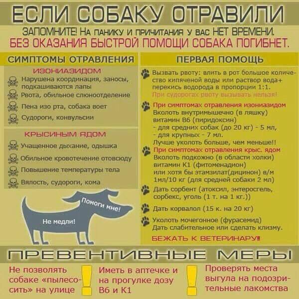 http://forumimage.ru/uploads/20171220/15138080645047761.jpg