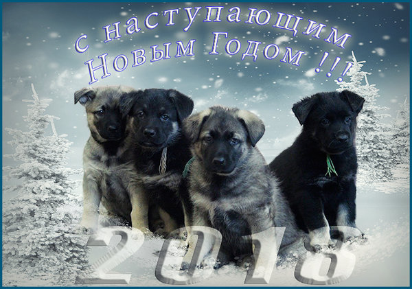 http://forumimage.ru/uploads/20171226/151432216118974718.jpg