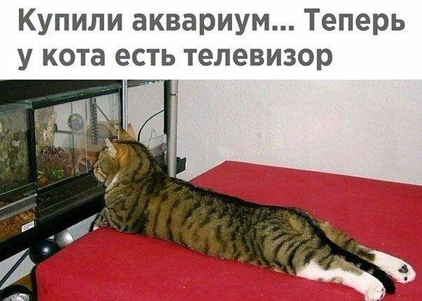 http://forumimage.ru/uploads/20180114/15159070587996674.jpg