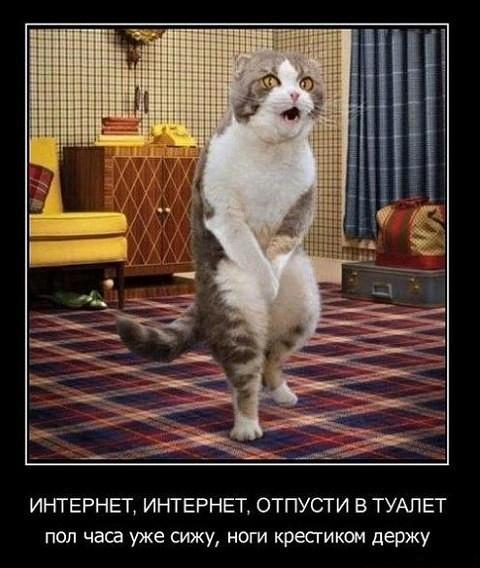 http://forumimage.ru/uploads/20180114/151596201661733053.jpg