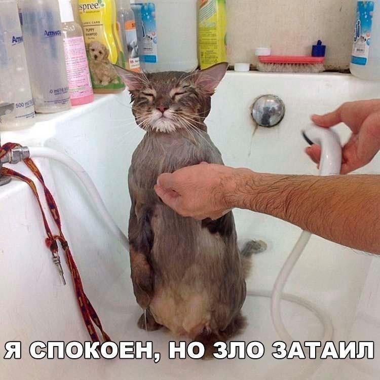 http://forumimage.ru/uploads/20180131/151736084149316681.jpg