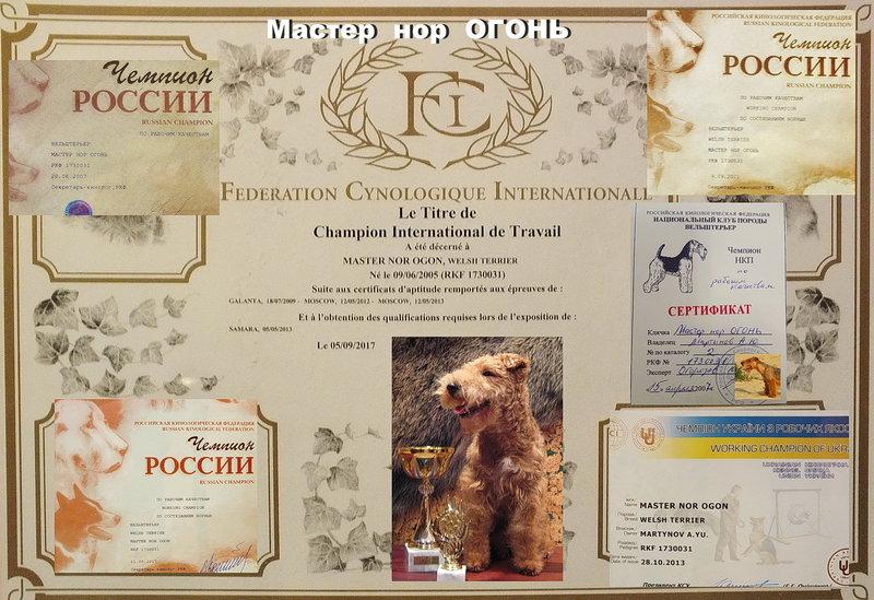 Всероссийский форум норных