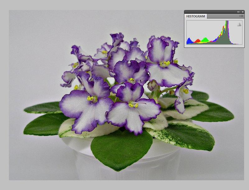 Обои цветы, фон, букет, фиалки картинки на рабочий стол, раздел ... | 611x800