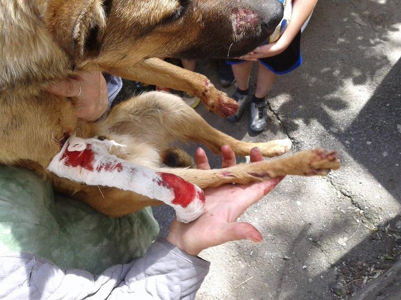 песик с рваными ранами конечностей • Темы животных