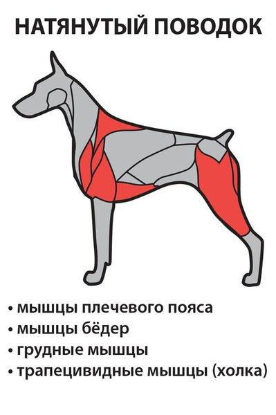 Связки  у собак 152724586110568073