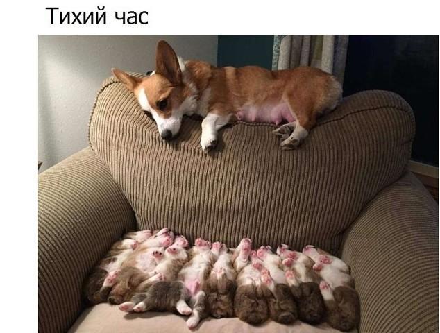 http://forumimage.ru/uploads/20180609/15285218712059622.jpg