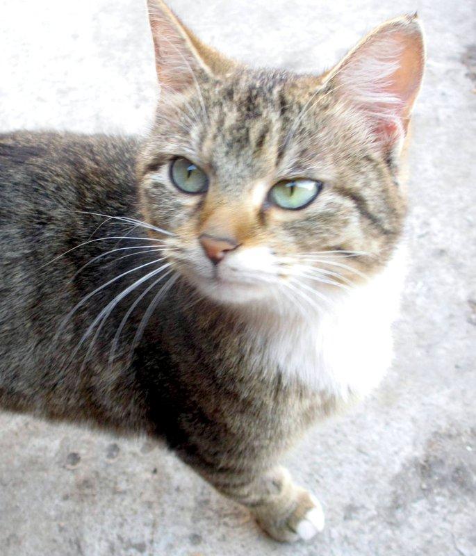 кошка с замершими плодами • Темы животных