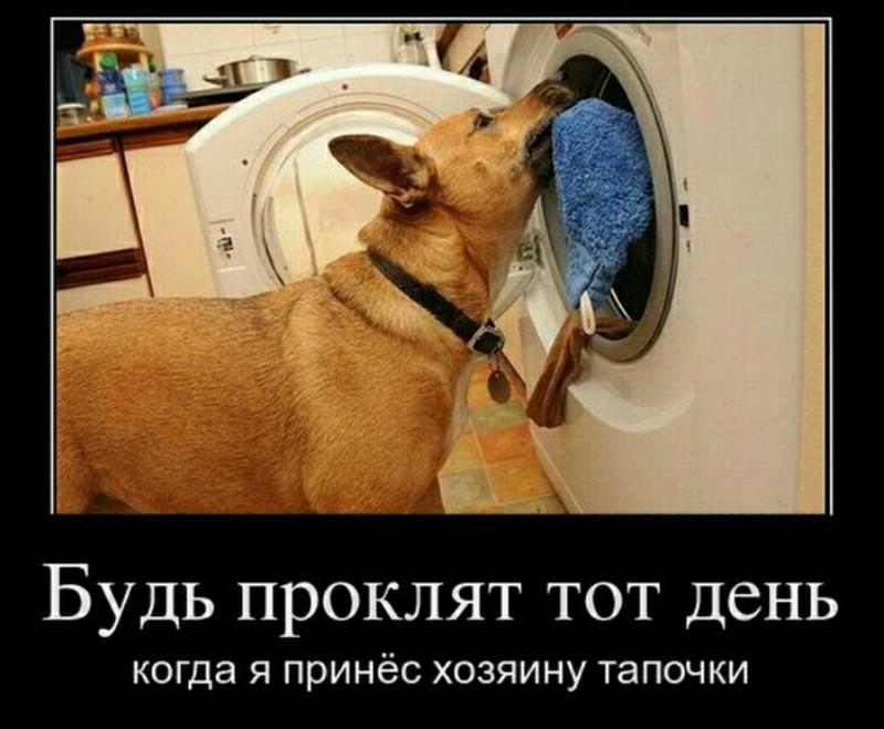 http://forumimage.ru/uploads/20180723/153234174821831686.jpg