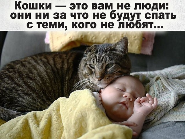 http://forumimage.ru/uploads/20180903/153596531689884345.jpg