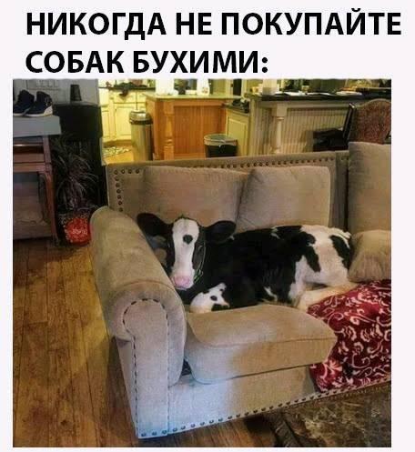 http://forumimage.ru/uploads/20180907/153631717603788073.jpg