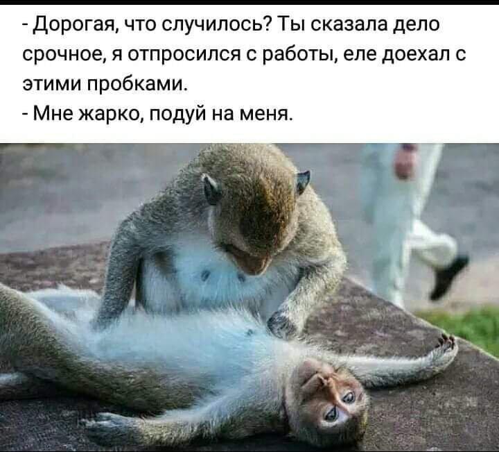 http://forumimage.ru/uploads/20180914/153690654149303170.jpg