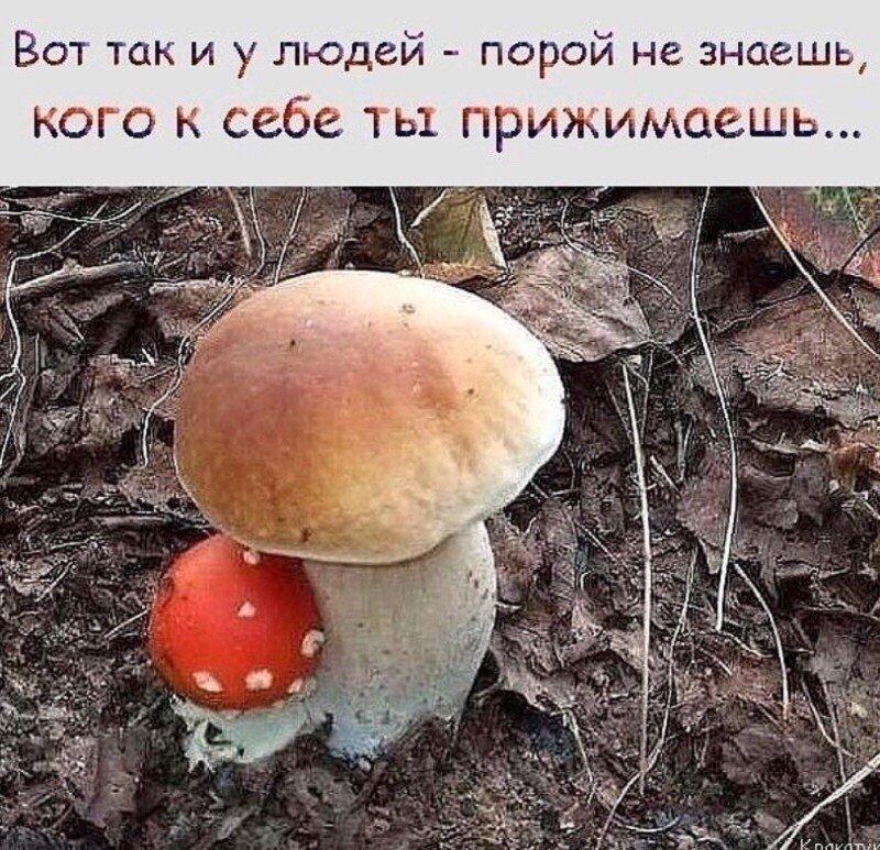 http://forumimage.ru/uploads/20180929/153825908838751585.jpg