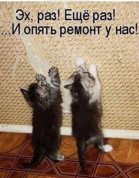 http://forumimage.ru/uploads/20181010/153917950169926982.jpg