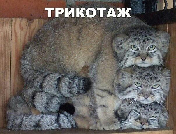 http://forumimage.ru/uploads/20181011/153927824032245051.jpg