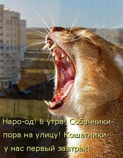 http://forumimage.ru/uploads/20181015/15396165131922543.jpg
