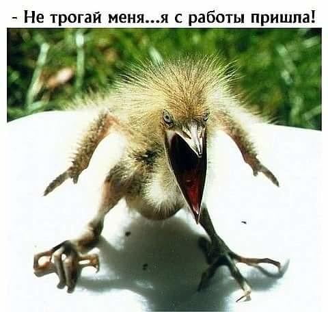 http://forumimage.ru/uploads/20181016/1539676347731825100.jpg