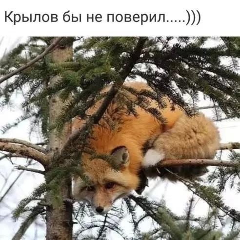 http://forumimage.ru/uploads/20181017/153977221176026346.jpg