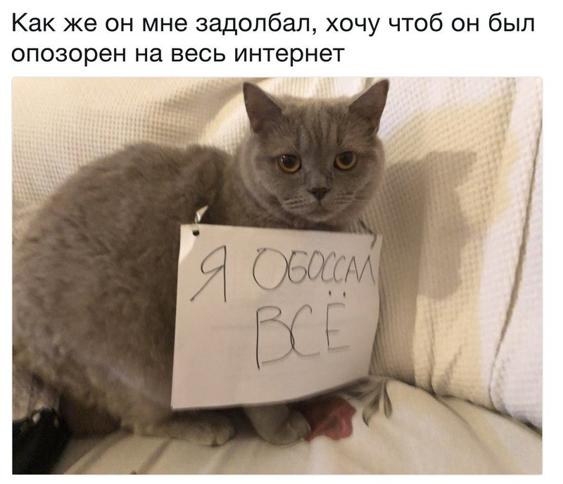 http://forumimage.ru/uploads/20181020/154005834676718930.jpg