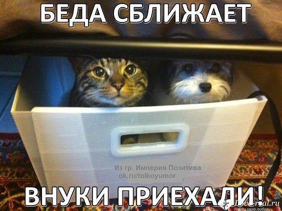 http://forumimage.ru/uploads/20181020/154007435179771626.jpg