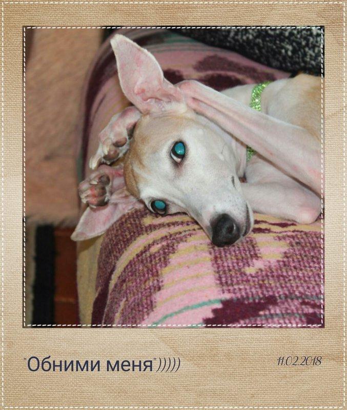 hunt72.ru   КЛУБ ОХОТНИКОВ СИБИРИ (ТЮМЕНЬ, ХМАО-Югра, ЯНАО)