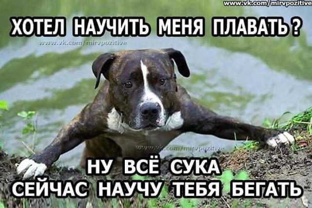 http://forumimage.ru/uploads/20181022/154021714492334137.jpg