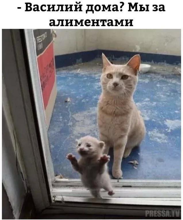 http://forumimage.ru/uploads/20181023/154032166179606973.jpg