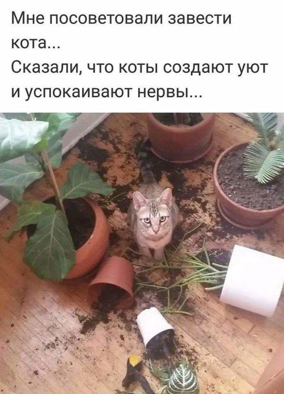 http://forumimage.ru/uploads/20181024/15403712345207196.jpg