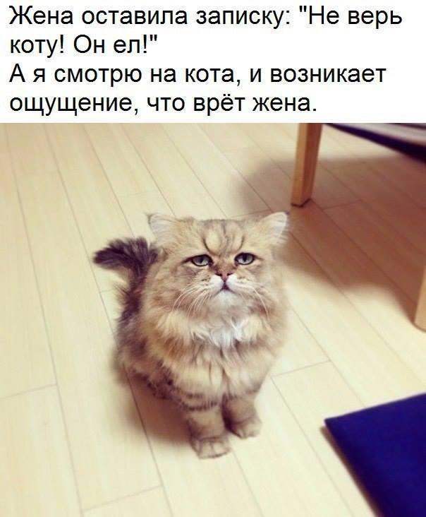 http://forumimage.ru/uploads/20181024/15403744405862653.jpg