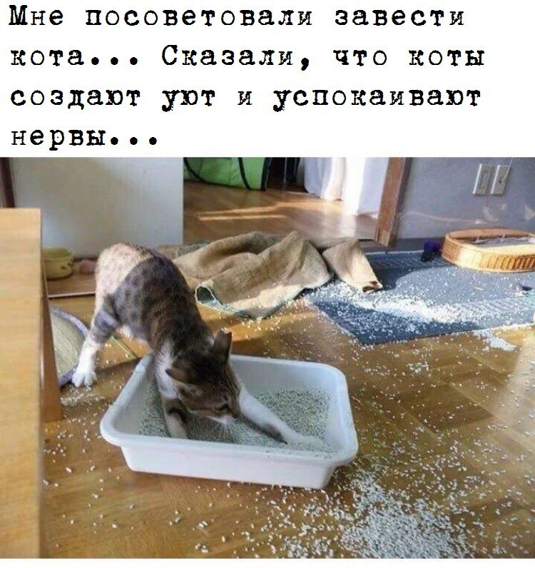 http://forumimage.ru/uploads/20181030/154091292122298766.jpg