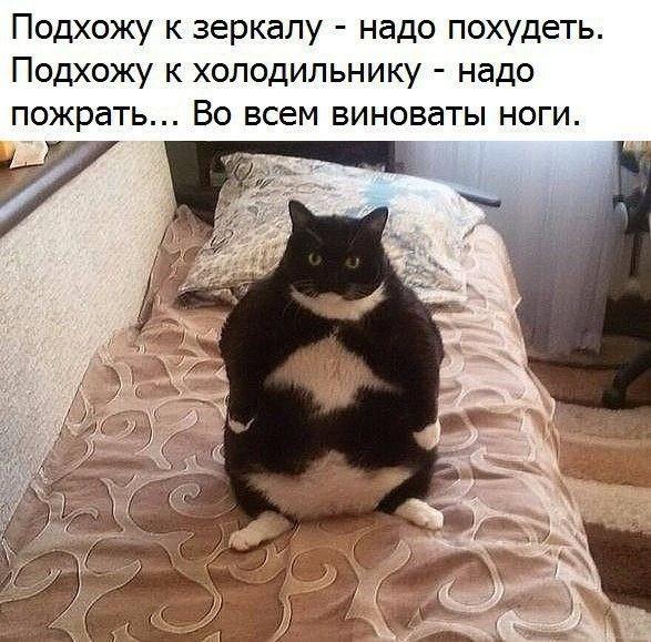 http://forumimage.ru/uploads/20181101/154105956072117943.jpg