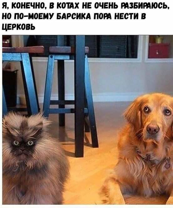 http://forumimage.ru/uploads/20181101/15411069215664227.jpg