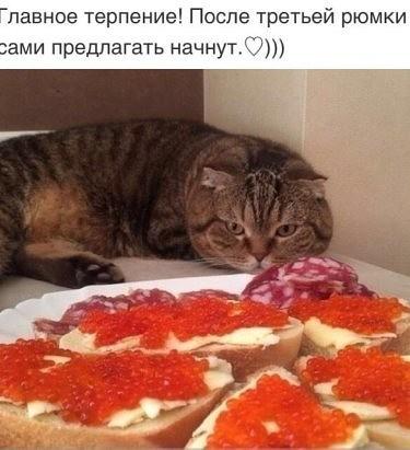 http://forumimage.ru/uploads/20181111/15419262557442911.jpg