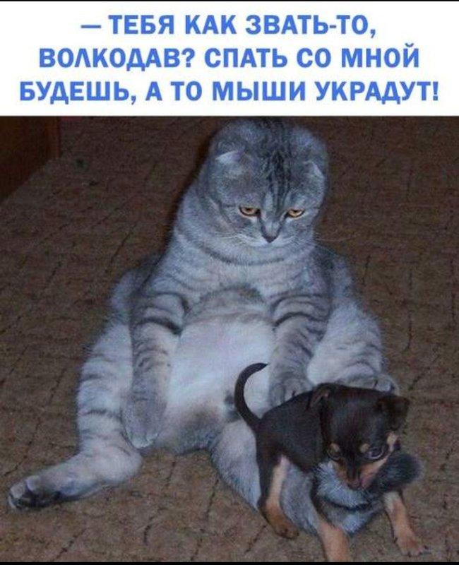 http://forumimage.ru/uploads/20181111/154192626478113752.jpg