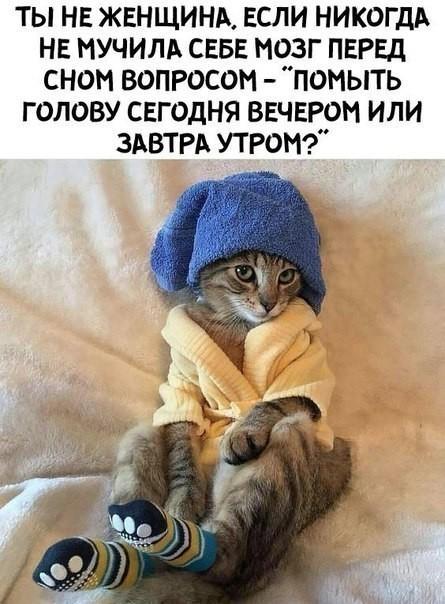 http://forumimage.ru/uploads/20181111/154196340607948914.jpg